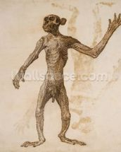 Monkey Standing, Anterior View (pen & ink over graphite on paper) mural wallpaper thumbnail