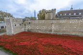 Tower of London Poppies mural wallpaper thumbnail