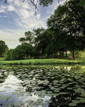 Dawn Lily Pond, The Hertfordshire Golf & Country Club, England mural wallpaper thumbnail
