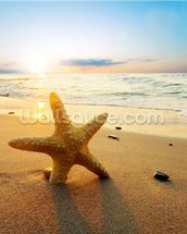 Sunset Starfish wall mural thumbnail