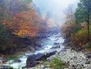 Misty Forest River wall mural thumbnail