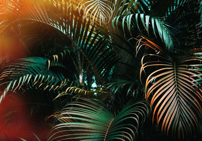 Palm Tree Wallpaper that will Make You Feel Like You're on Holiday!