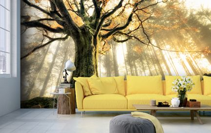 1x Photography Wall Murals Wallpaper