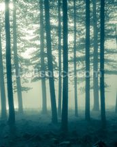 Foggy Forest wall mural thumbnail