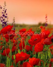 Field of Poppies wallpaper mural thumbnail