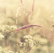 Summer Meadow - Sepia wall mural thumbnail