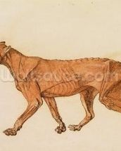 Tiger, Lateral View, Skin Removed, from A Comparative Anatomical Exposition of the Structure of the Human Body with that of a Tiger and a Common Fowl (red chalk and ink on paper) wall mural thumbnail