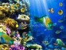 Coral Colony and Coral Fish wall mural thumbnail