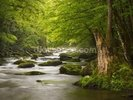 Great Smoky Mountains Tremont River wall mural thumbnail