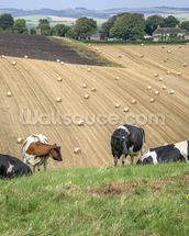 South Downs Farmland wallpaper mural thumbnail