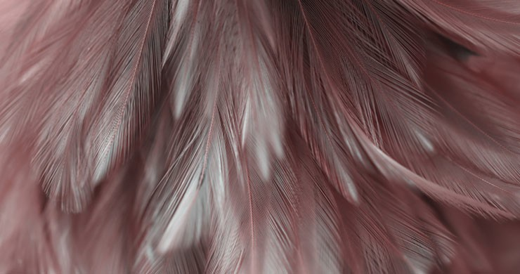 close feather print wallpaper in tones of pink and grey