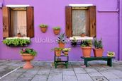 Purple Burano Island House, Venice mural wallpaper thumbnail
