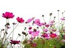 Wild Flowers wall mural thumbnail
